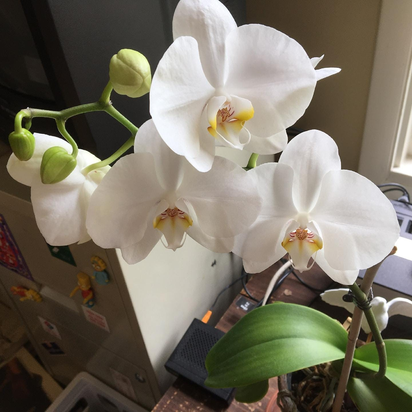 The orchid has come to life!, 5-20.