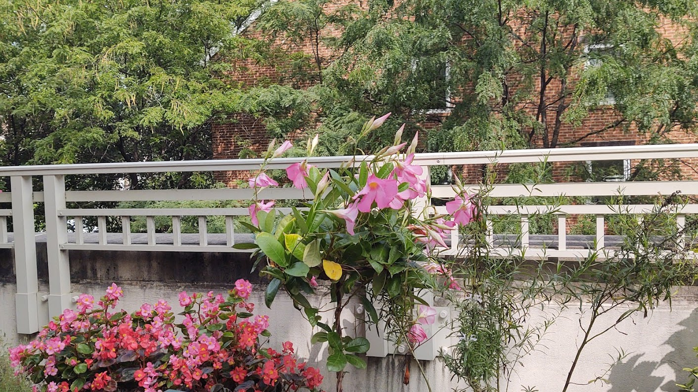 Still enjoying the colorful flowers on our terrace,10-20.