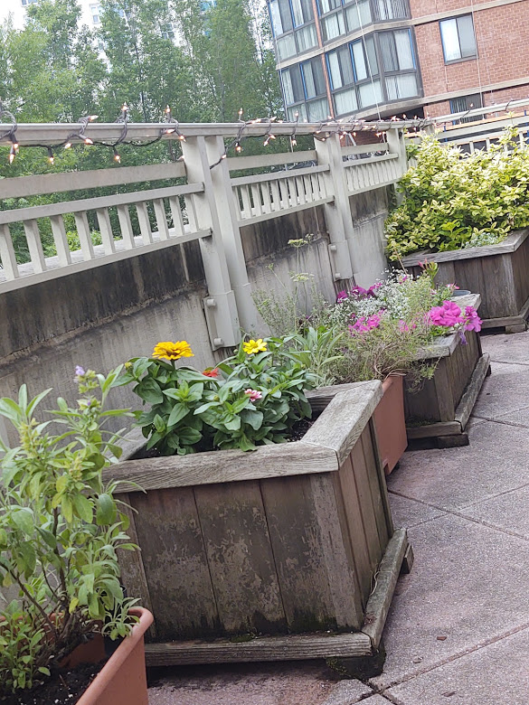 We finally had some flowers (pictured are zinnias and petunias, but there are more you can't see in this picture) planted on the terrace, 6-21.