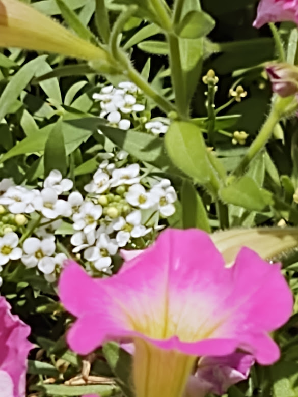 A close-up of our gorgeous flowers on the terrace, 7-21.