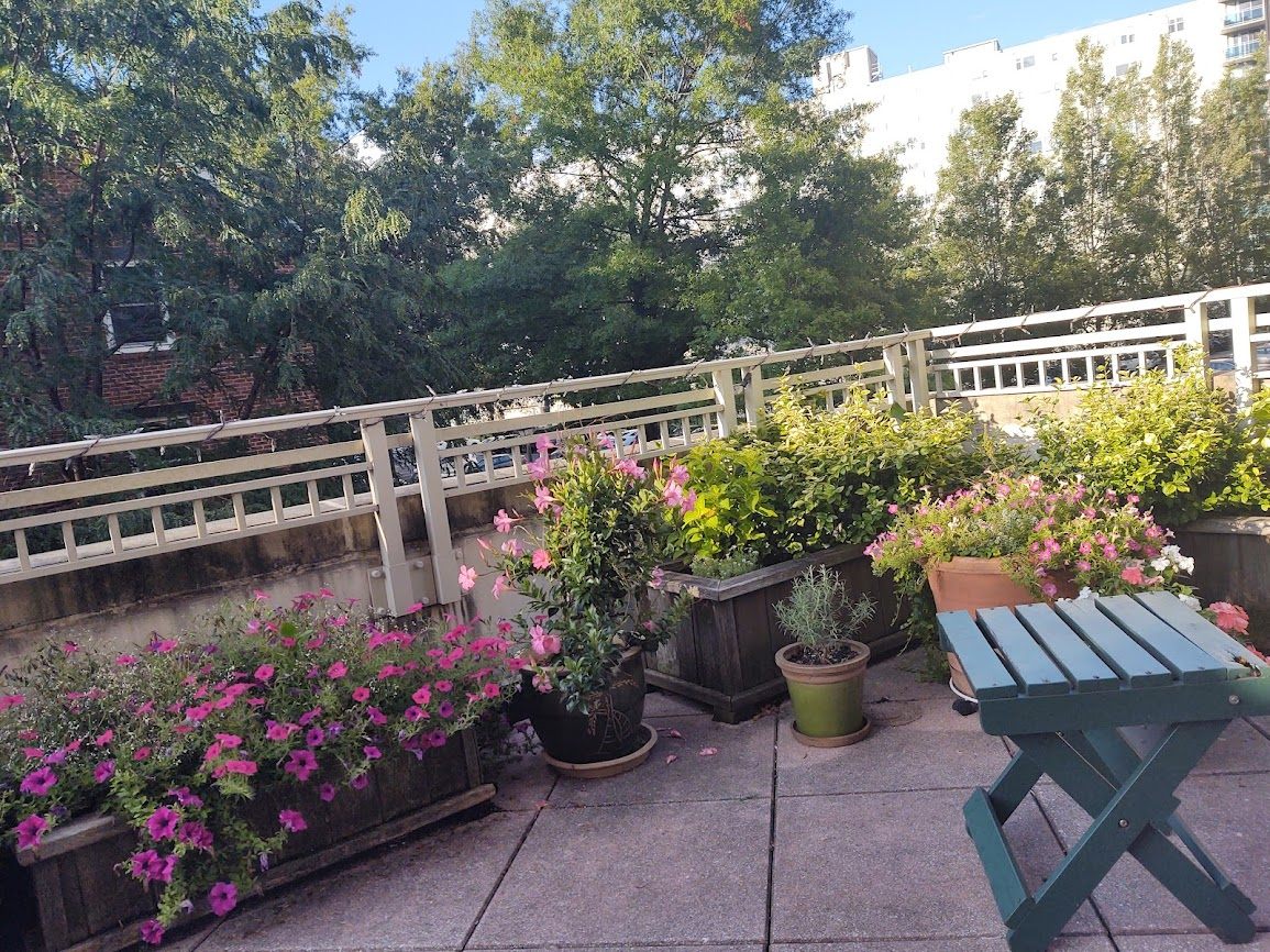 Some of the gorgeous flowers and new life on our terrace, 8-21.