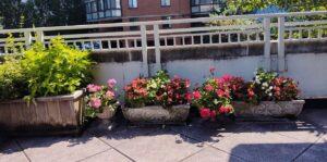 Flowers on a sunny terrace.