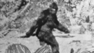 "Photograph of ""Bigfoot."""